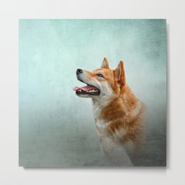Drawing Japanese Shiba Inu dog 2 Metal Print
