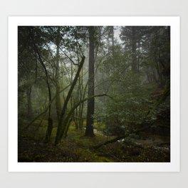 forest after rain Art Print