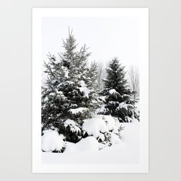 Winter Evergreens Art Print