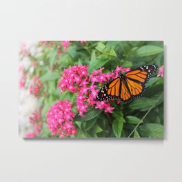 Buttefly Surprise Metal Print