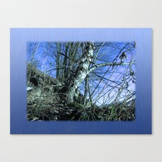 Early Spring, Starry Night Canvas Print