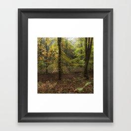 Autumn Highlights Framed Art Print
