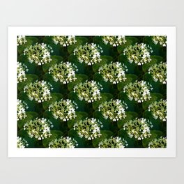 Hills-of-snow hydrangea pattern Art Print
