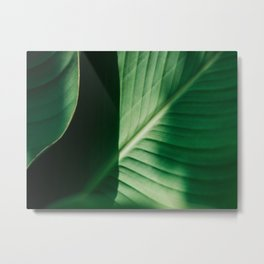Close Up Of Green Tropical Textured Leaf Metal Print