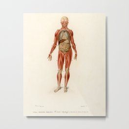 Vintage Print - Universal Dictionary of Natural History (1849) - Human Muscles Metal Print