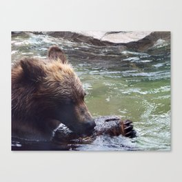 Is It Ok To Eat Wood? Canvas Print
