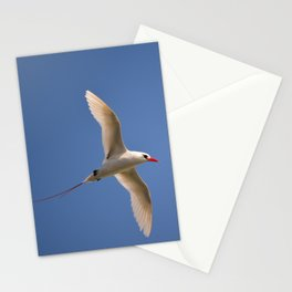 Red-tailed Tropicbird Stationery Cards