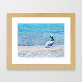 Strutting Pelican Framed Art Print