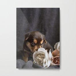Australian kelpie puppy dog Metal Print