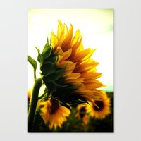 sunflower Canvas Prints featuring Sunflower by 2sweet4words Designs