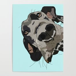 Great Dane in your face (teal) Poster