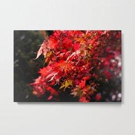 Autumn At Winkworth Metal Print