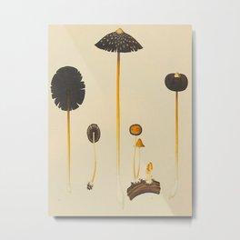 Vintage Scientific Illustration Of Mushrooms Metal Print