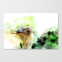 Ostrich in watercolor Canvas Print