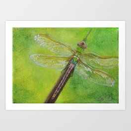 Dragonfly #8 - Green Darner Art Print