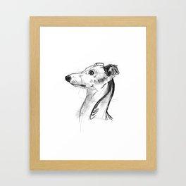 Italian Greyhound Sketch Framed Art Print
