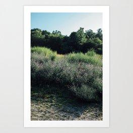 Summer Shades Art Print