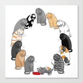 A Cat's Patience Canvas Print