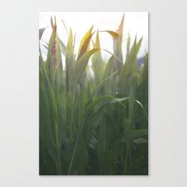 The Corns. Canvas Print