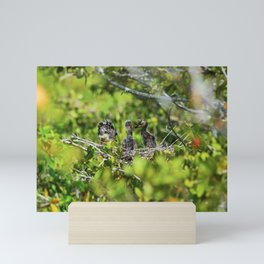 Yellow-crowned Night Heron Babies I Mini Art Print