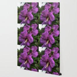 Hibiscus Flowering Shrub Wallpaper