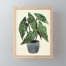 begonia maculata interior plant Framed Mini Art Print