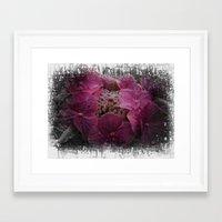 hydrangea Framed Art Prints featuring Hydrangea by Paul & Fe Photography