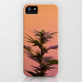 Macro cannabis kush photo iPhone Case