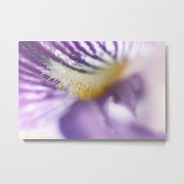Purple Iris Petals and Yellow Stamen Macro Photography Metal Print