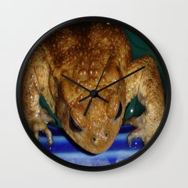 Bufo Bufo Clinging To The Edge Of A Swimming Pool Wall Clock