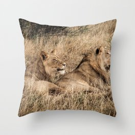 Camouflaged African Male Lions of the Kalahari Desert Throw Pillow