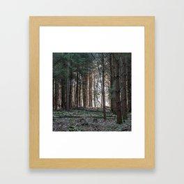 Through the Larch Woods Framed Art Print