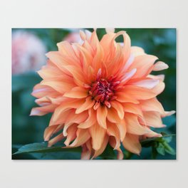 Flowers in the fall Canvas Print