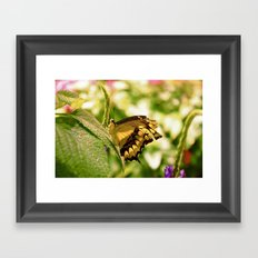 Fragile Spring Framed Art Print