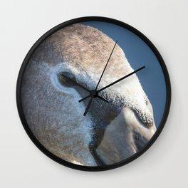 Juvenile brown swan portrait close up, Mute swan (Cygnus olor) Wall Clock