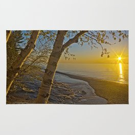 A Birch tree sunset Rug