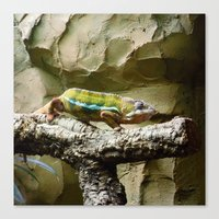 lizard Canvas Prints featuring Lizard by WonderfulDreamPicture
