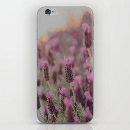 Lavender Stories iPhone Skin