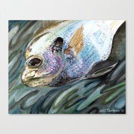 """Bluegill"" Canvas Print"