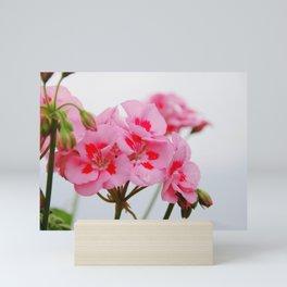 Pink Flowers in the Fog Mini Art Print