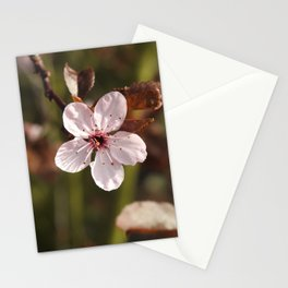 Beauty In Solitude Stationery Cards
