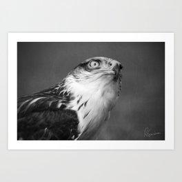 Red-tailed Hawk I B&W Art Print