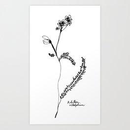 Achillea millefolium Art Print