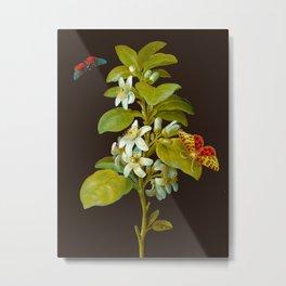 Elisabeth Christina Matthes - Botanical Floral Insect Illustration Metal Print
