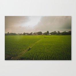 The Rice Paddies of Nepal 001 Canvas Print