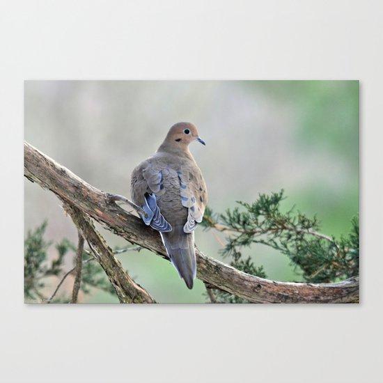 Gentle Dove Canvas Print