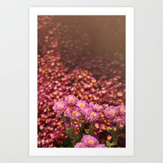 Colorful Pink Flowers Art Print