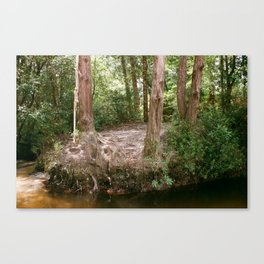 rope swing Canvas Print