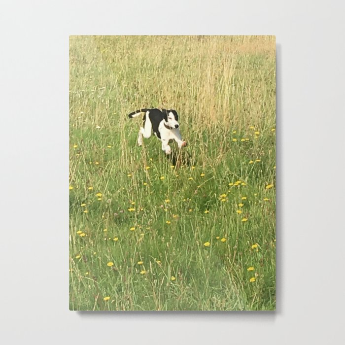 Happiness is running wild and free, and not letting your feet touch the ground! Metal Print