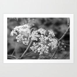 wild parsley Art Print
